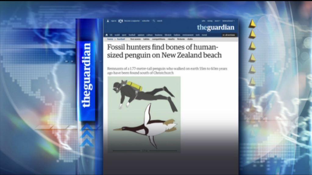 【環球薈報】新西蘭古代巨型企鵝高如成年男子