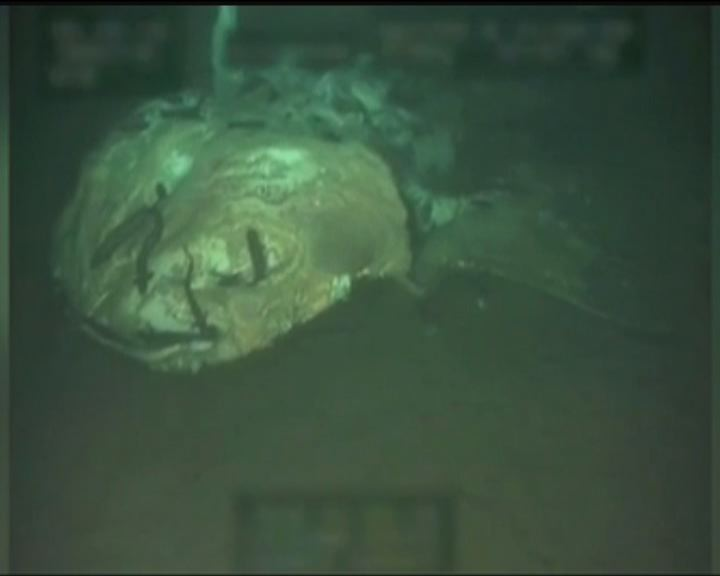 【環球薈報】大型海洋生物死後屍體變糧食