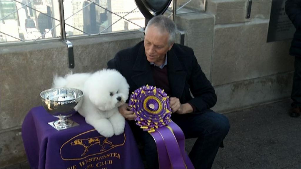 【環球薈報】比熊犬弗林成為美國第一狗
