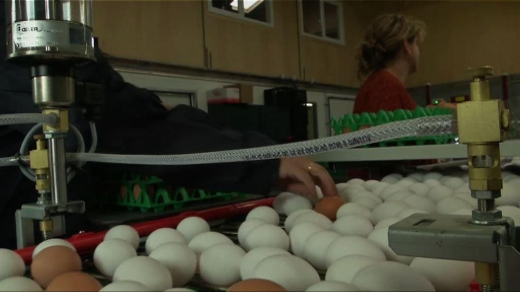 【環球薈報】法國承諾五年後實現雞蛋革命