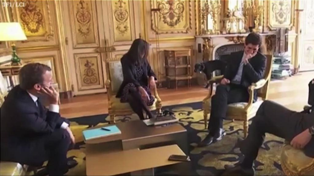 【環球薈報】「法國第一狗」於愛麗舍宮當眾小便