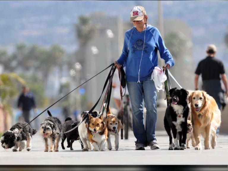 【環球薈報】英國遛狗行業屬高薪厚職