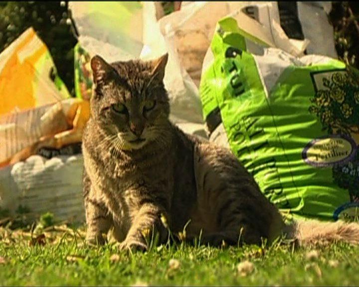 【環球薈報】貓可將結核病傳播人類