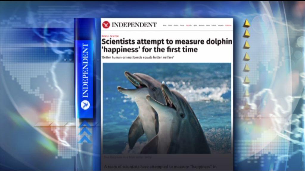 【環球薈報】圈養海豚最期待與人互動