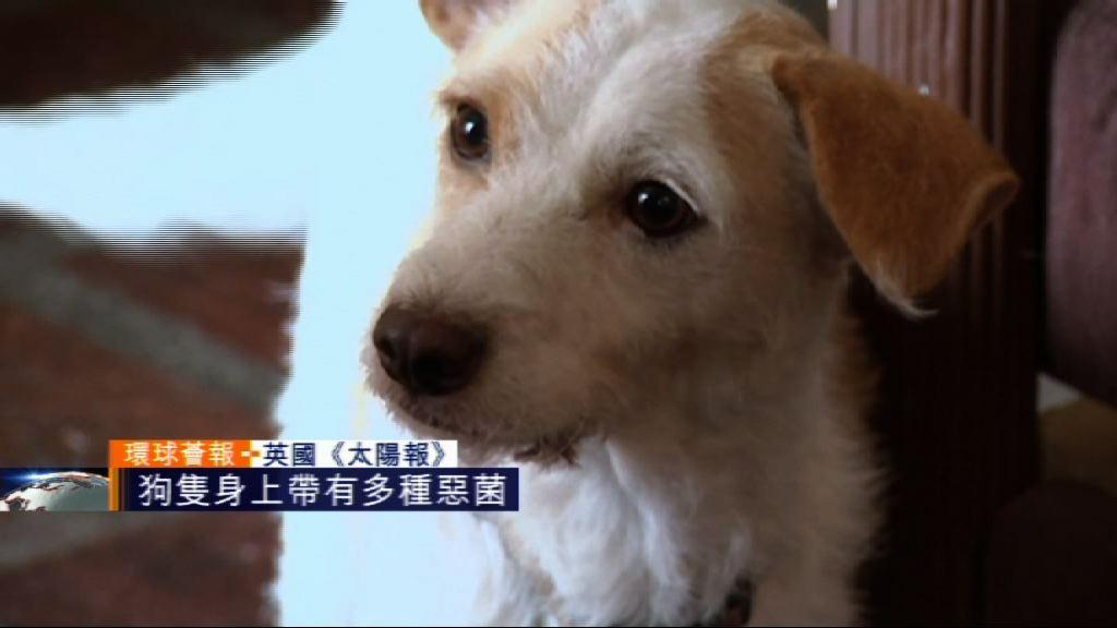 【環球薈報】專家指狗隻身上帶有多種惡菌