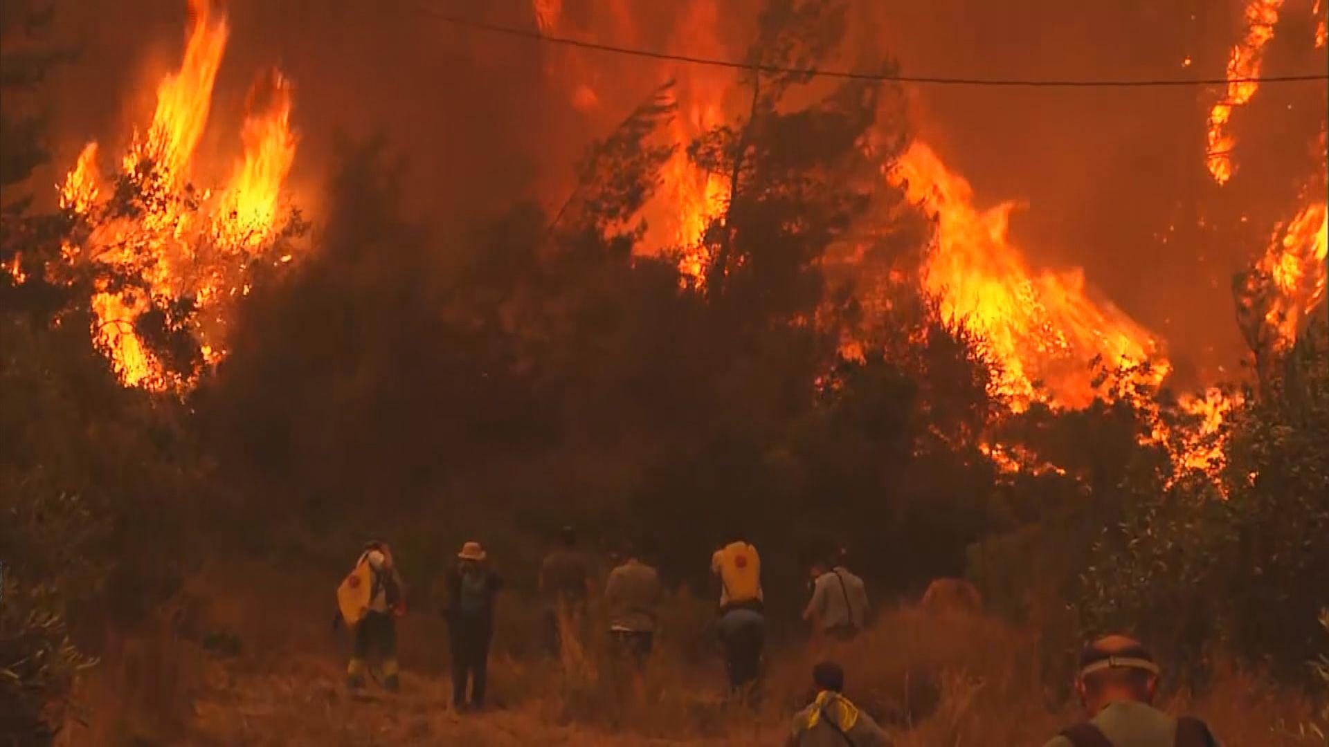 希臘山火失控埃維亞島數千居民需要撤離
