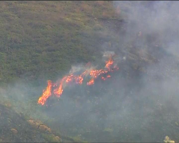 消防處接獲49宗山火報告