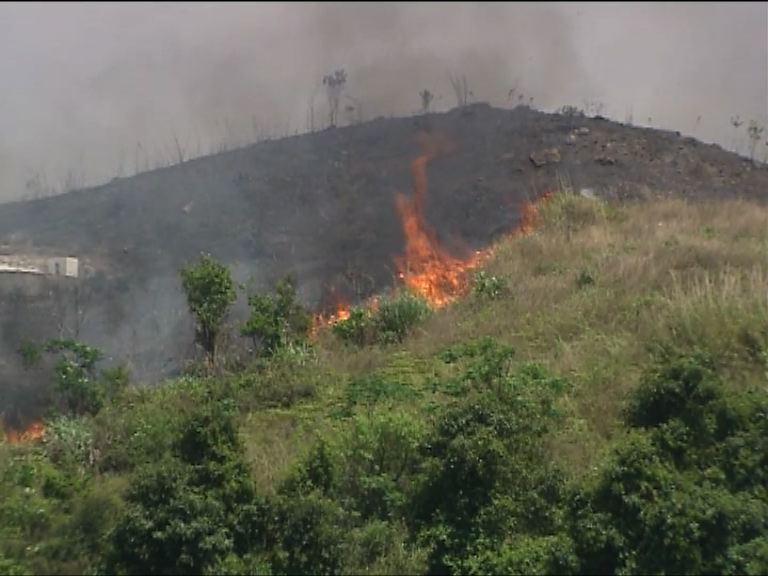 清明節消防處接獲多宗山火報告