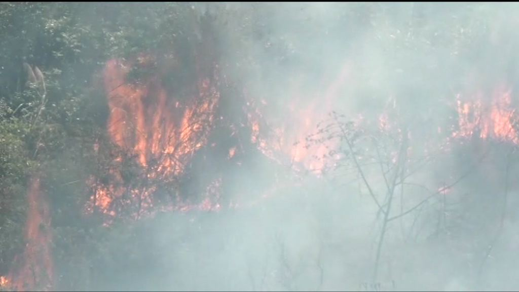 清明節 消防處接獲最少92宗山火