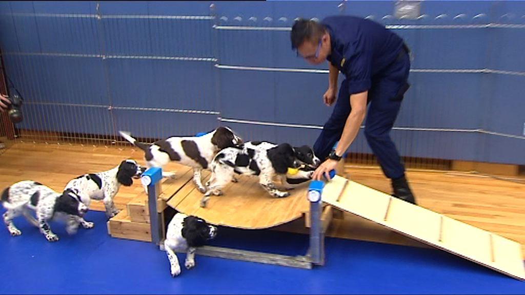 懲教海關合作繁殖工作犬