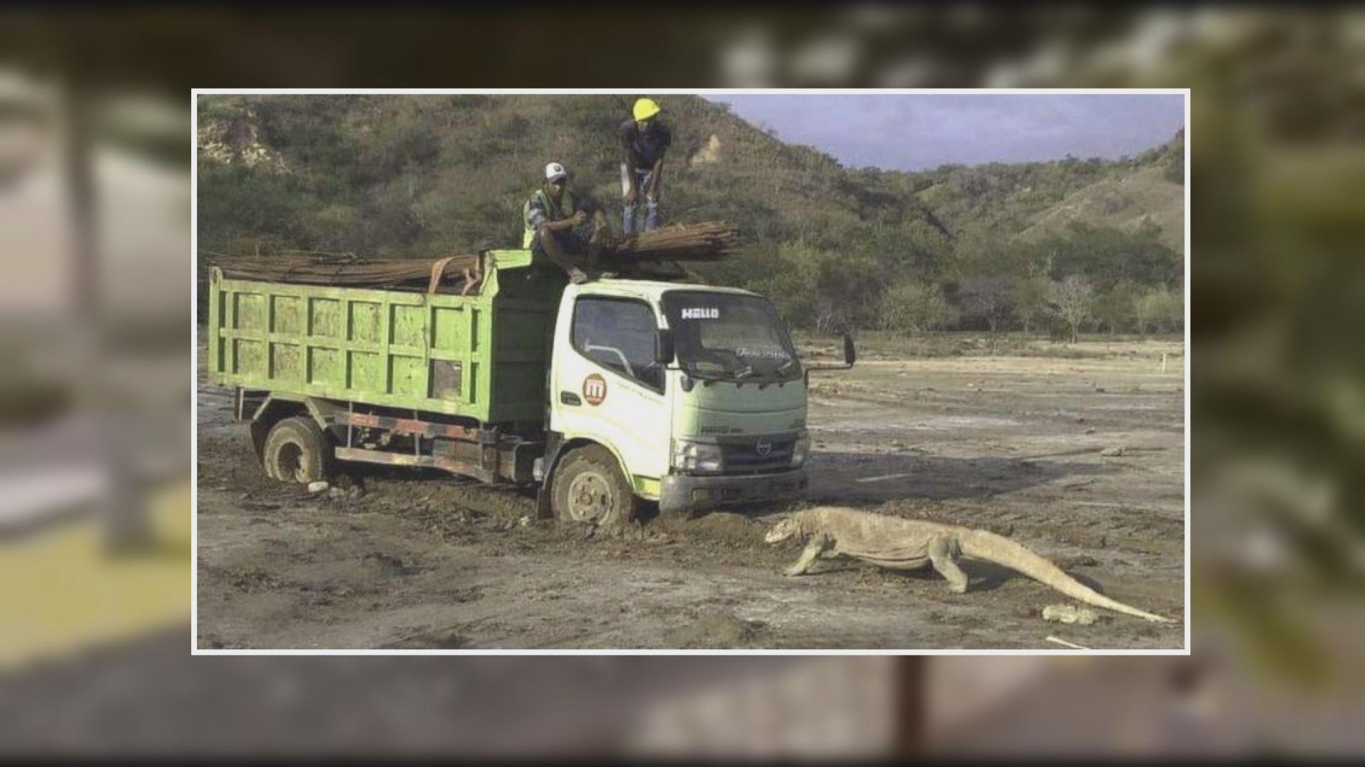 【捍衛家園】科莫多龍阻擋工程車照片引起環保爭議