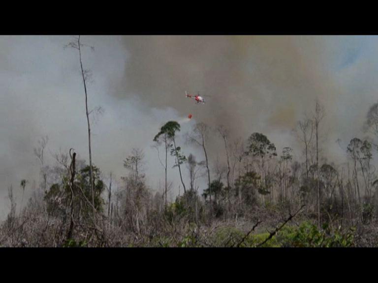 印尼向四國家求助滅山火