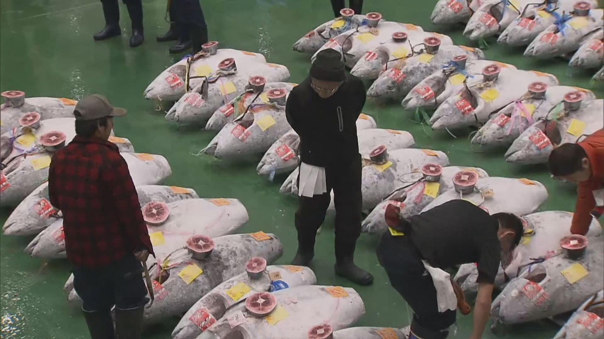日本豐洲市場有藍鰭吞拿魚破紀錄高價投得