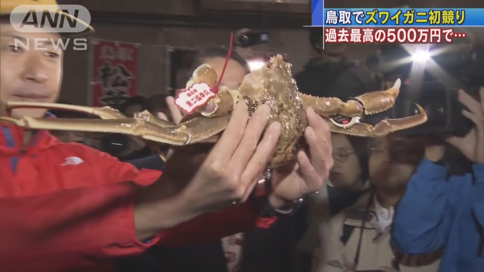 日本「五輝星」松葉蟹拍賣價破紀錄