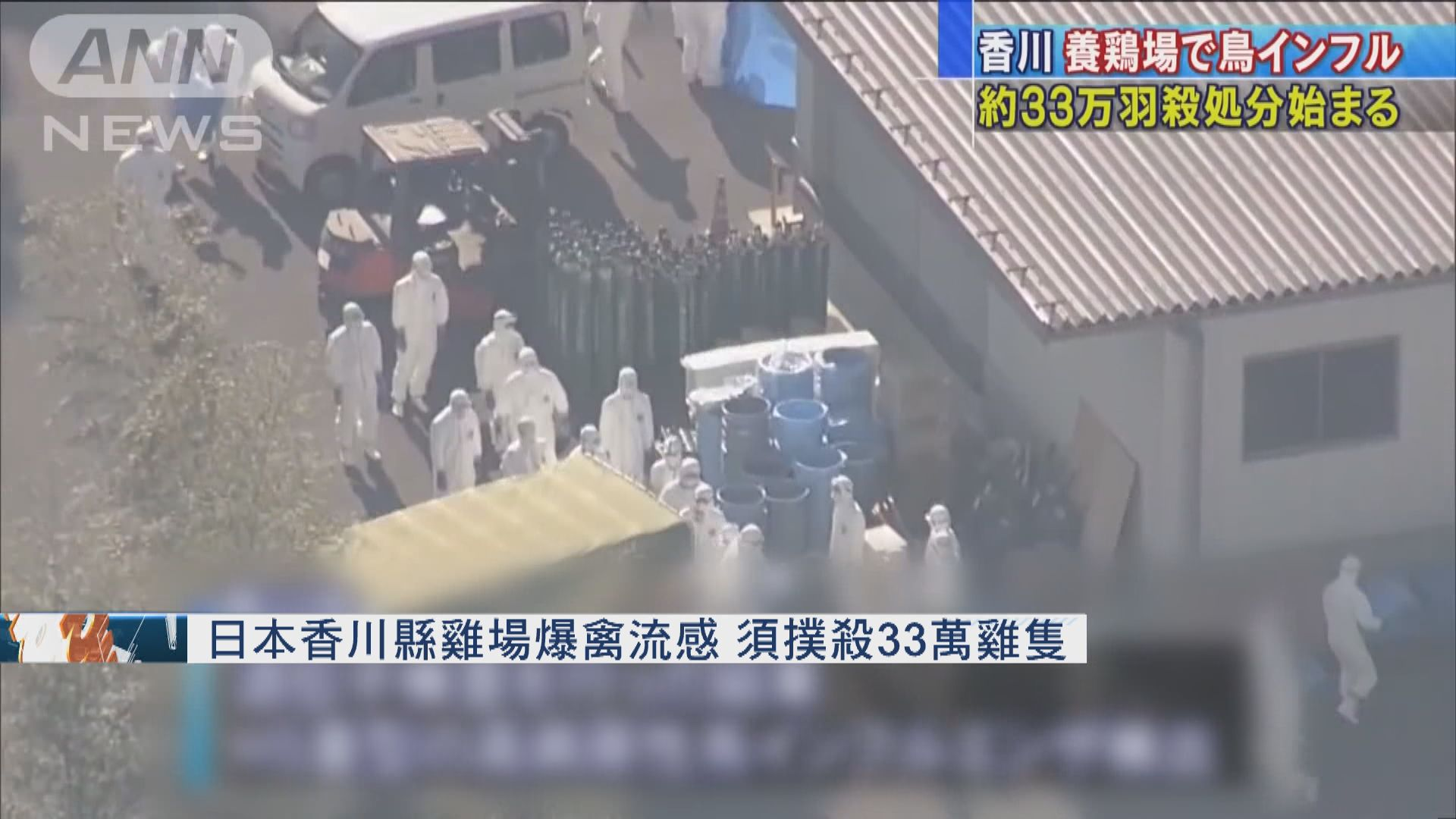 日本香川縣雞場爆禽流感 須撲殺33萬雞隻