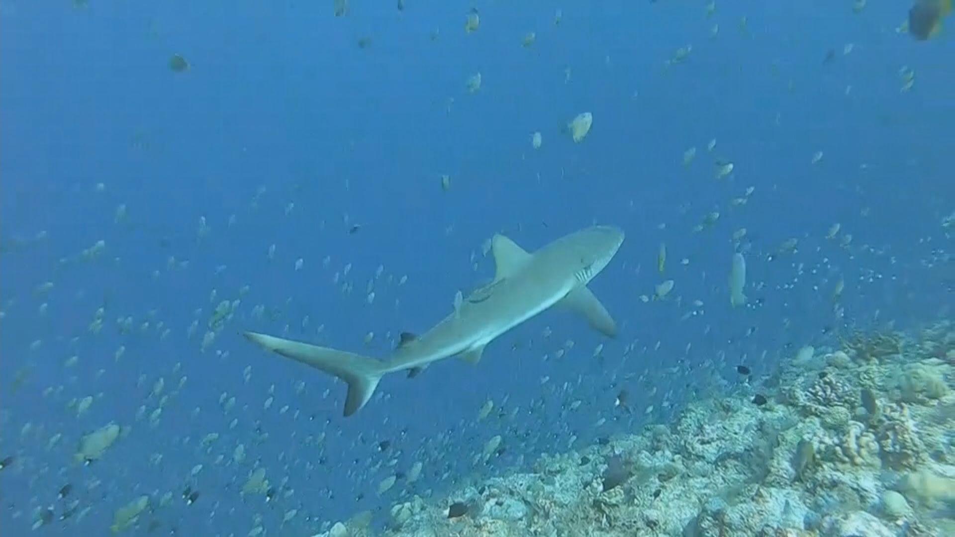 日本決定將核廢水排出海 學者指影響全球魚類遷徒及漁業安全