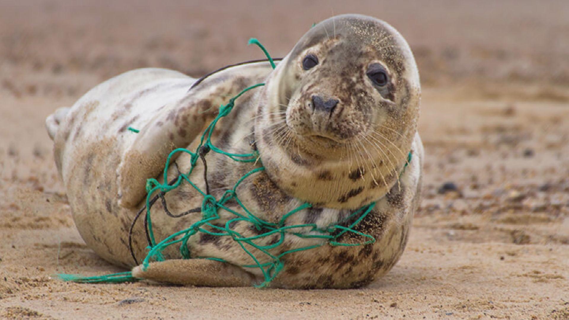 日本有團體回收廢棄漁網造成再生塑膠物料