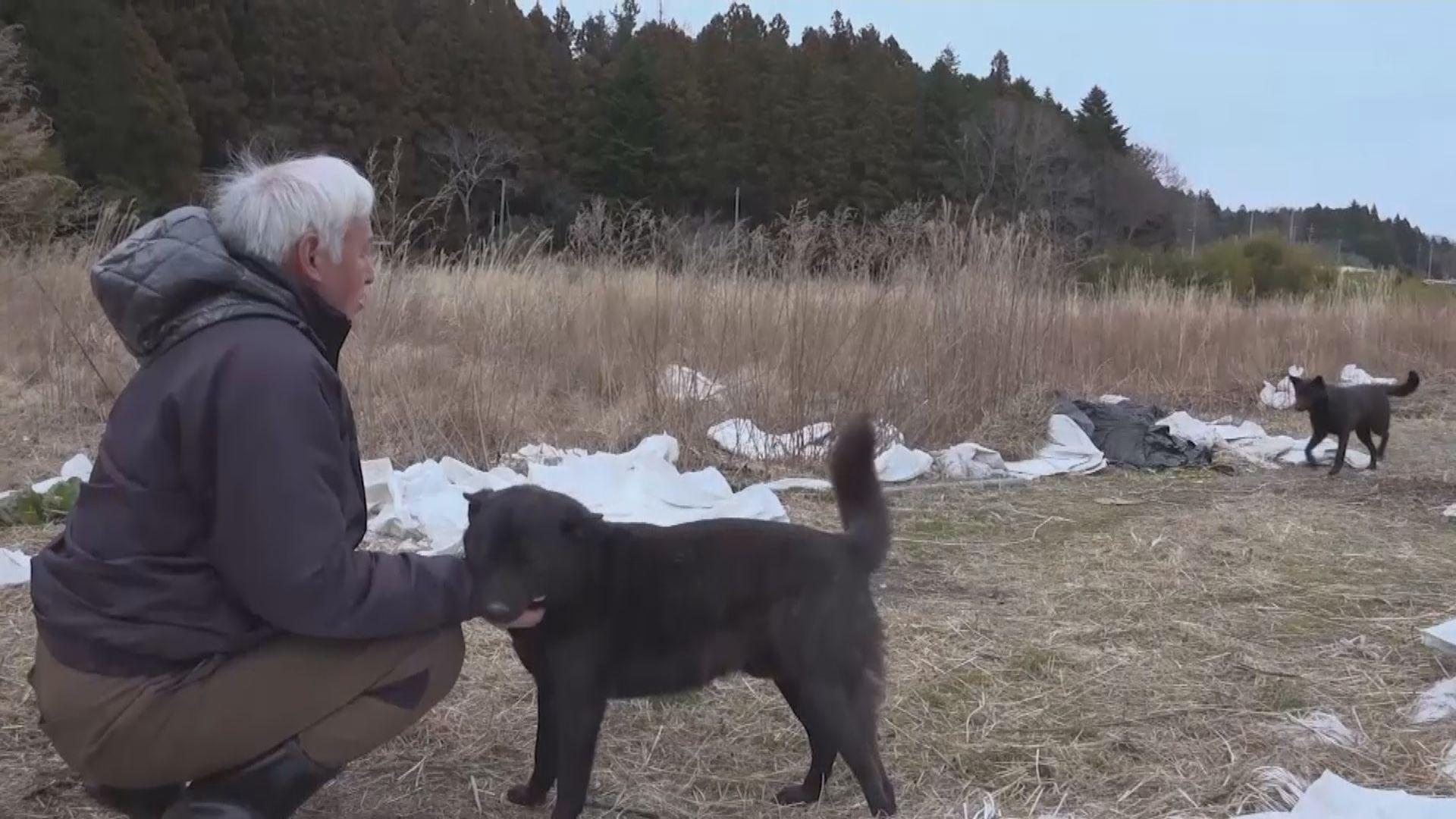 日本福島核事故十周年 有居民堅持留守禁區照顧動物
