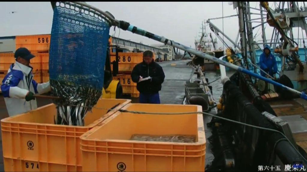日本倡限捕秋刀魚 中國再反對