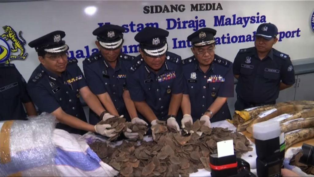馬來西亞檢獲走私象牙和穿山甲鱗片