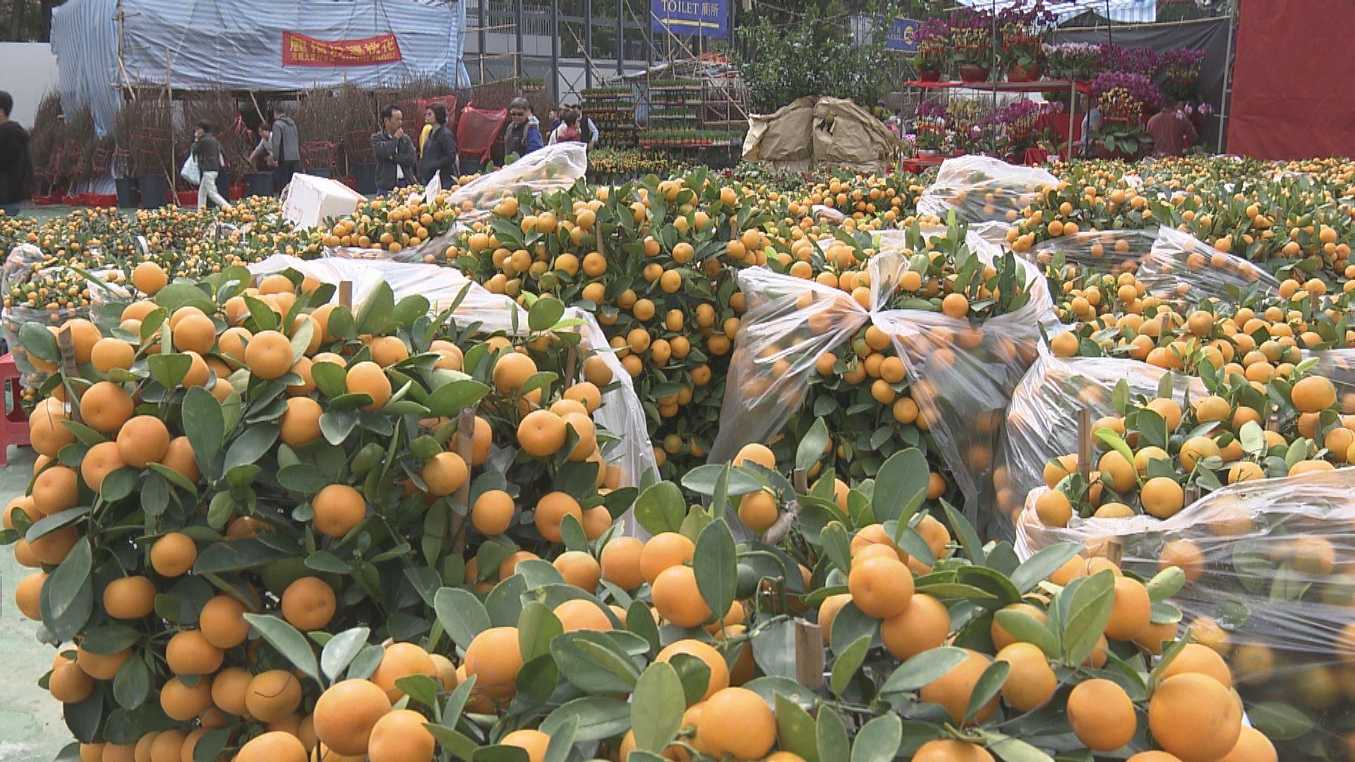 政府宣布取消農曆年宵市場及沙田車公誕新春市場
