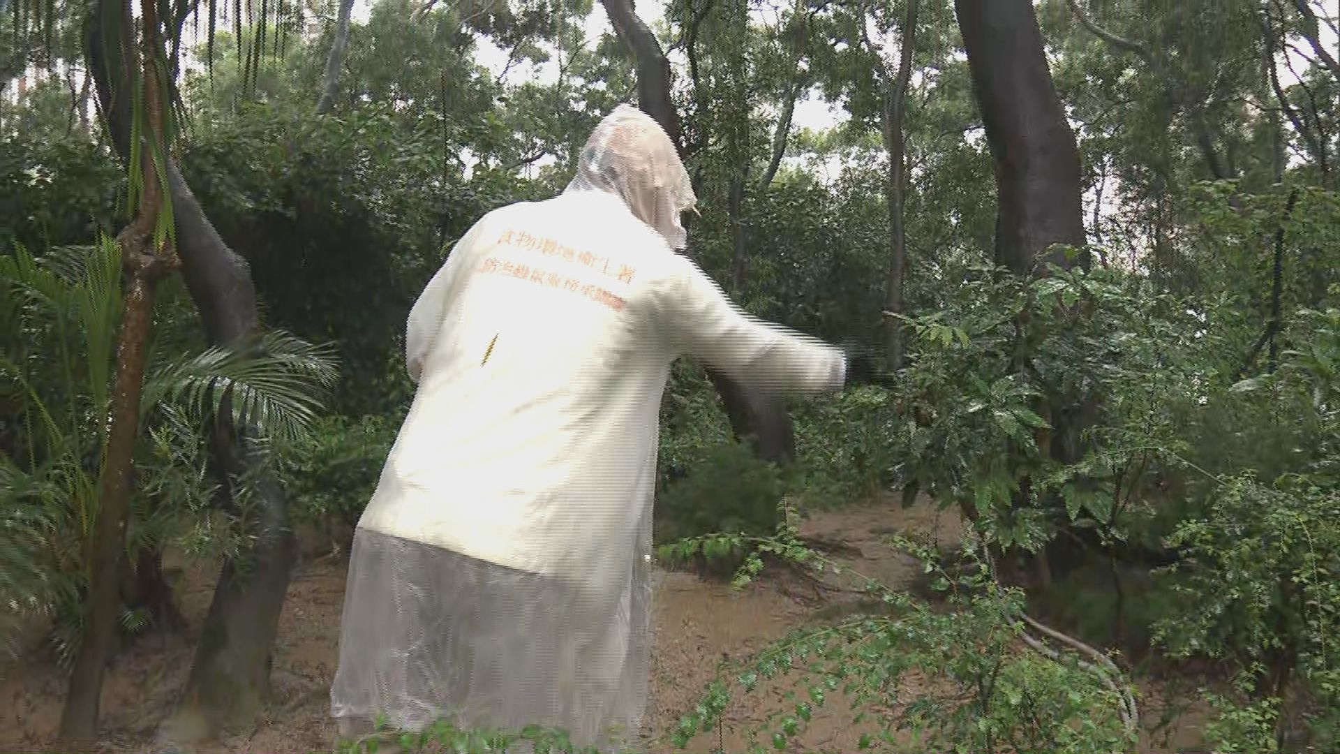 食環署繼續到獅子山公園滅蚊
