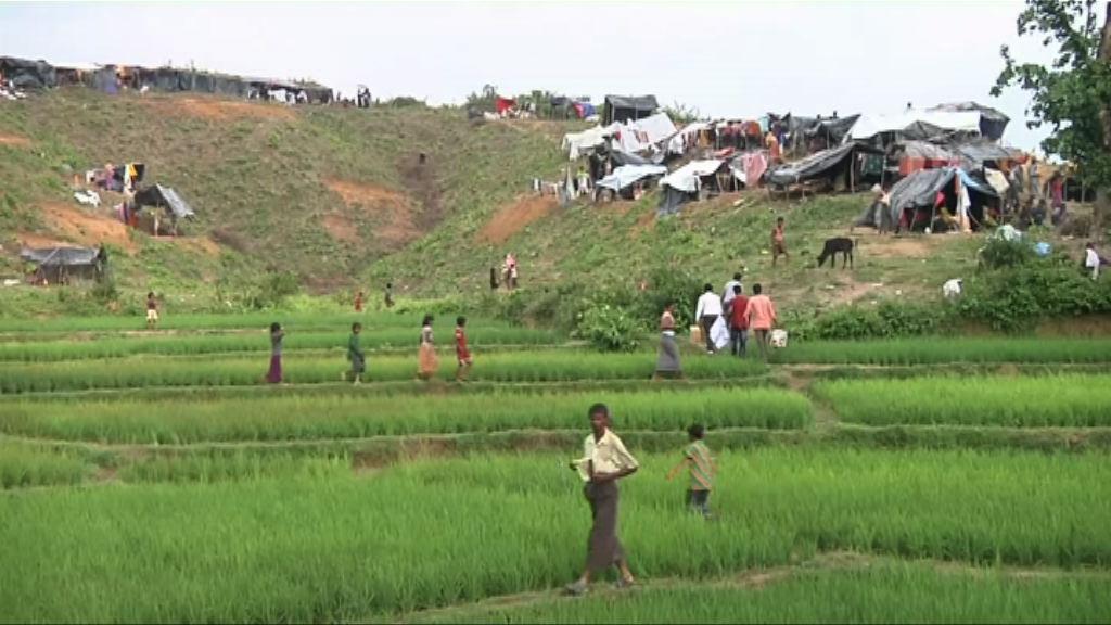 緬甸軍隊疑在孟加拉邊境埋地雷