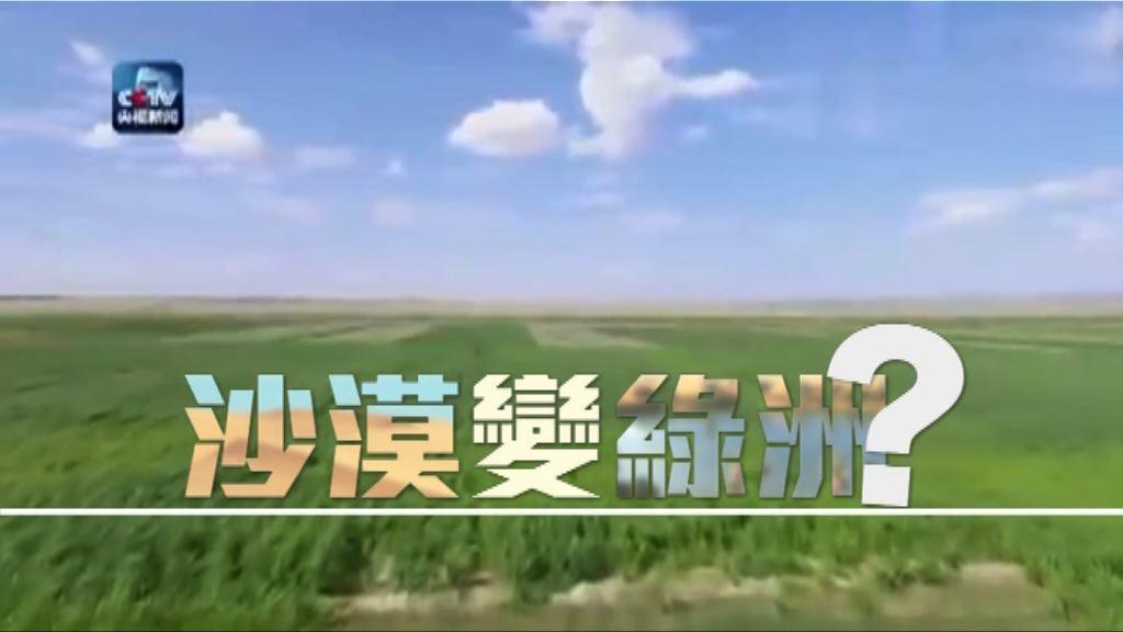 【新聞智庫】沙漠變綠洲?