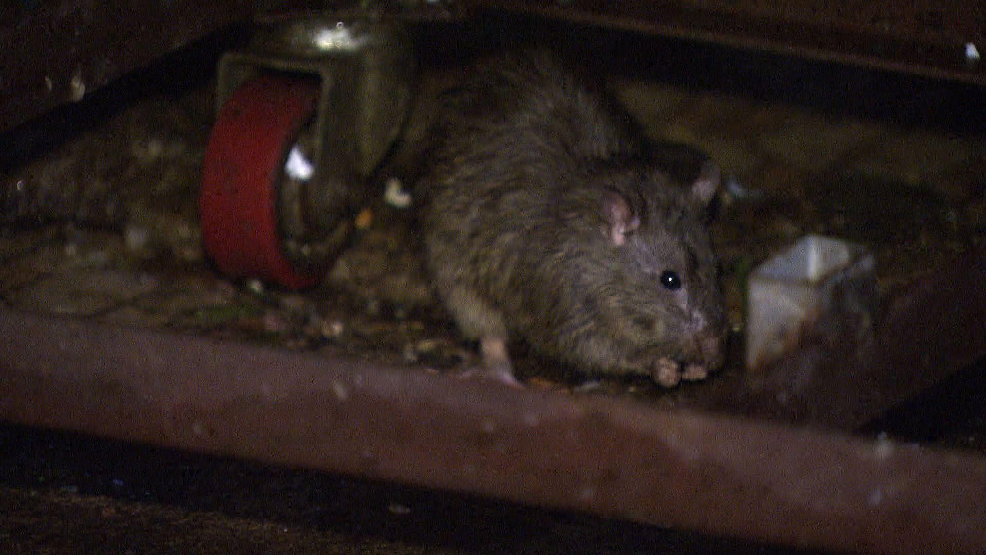 【經緯線】咪嚟老鼠(二)