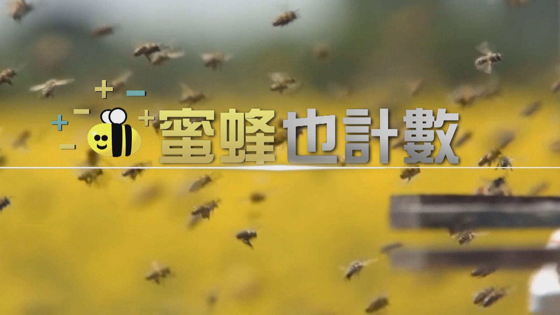 【新聞智庫】蜜蜂也計數