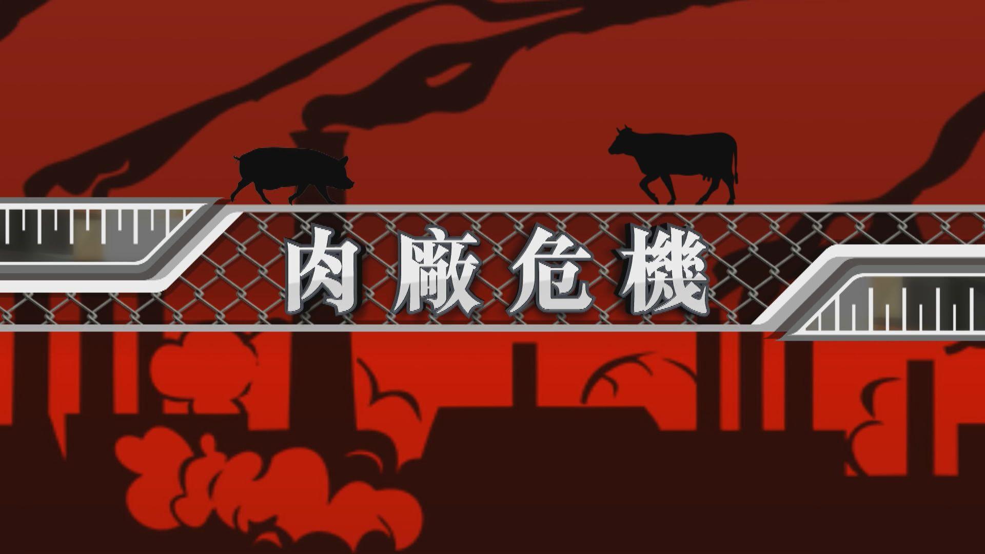 【新聞智庫】美國肉廠淪為疫情「熱點」 肉類供應與員工健康如何取捨?