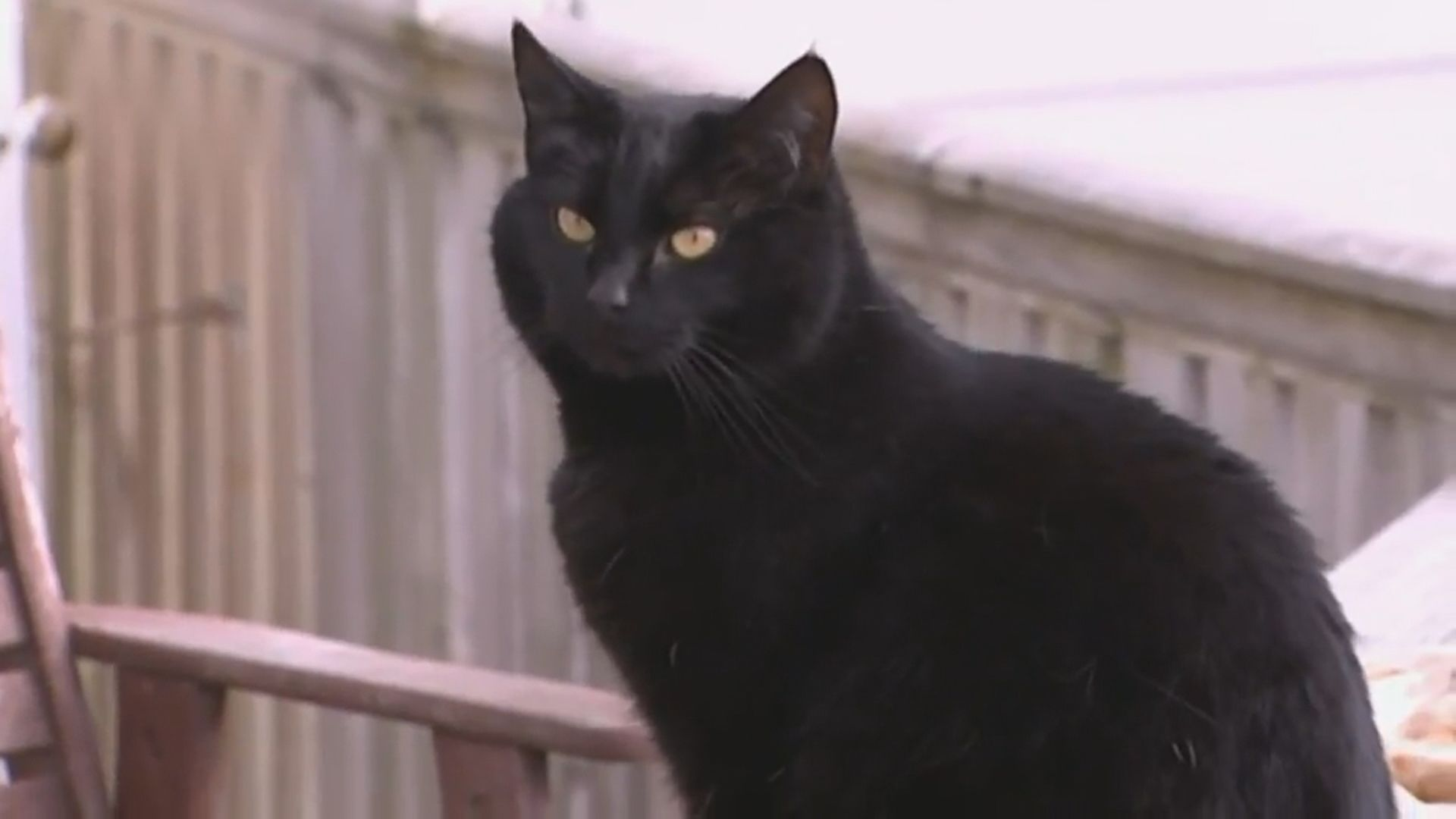 新西蘭小鎮建議禁貓惹反彈