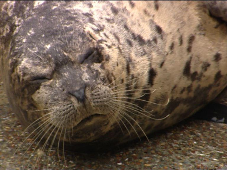 海洋公園斑海豹被困水管口死亡