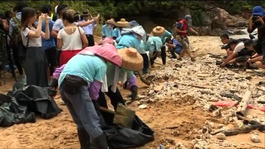 當局派員南丫島清理棕櫚硬脂