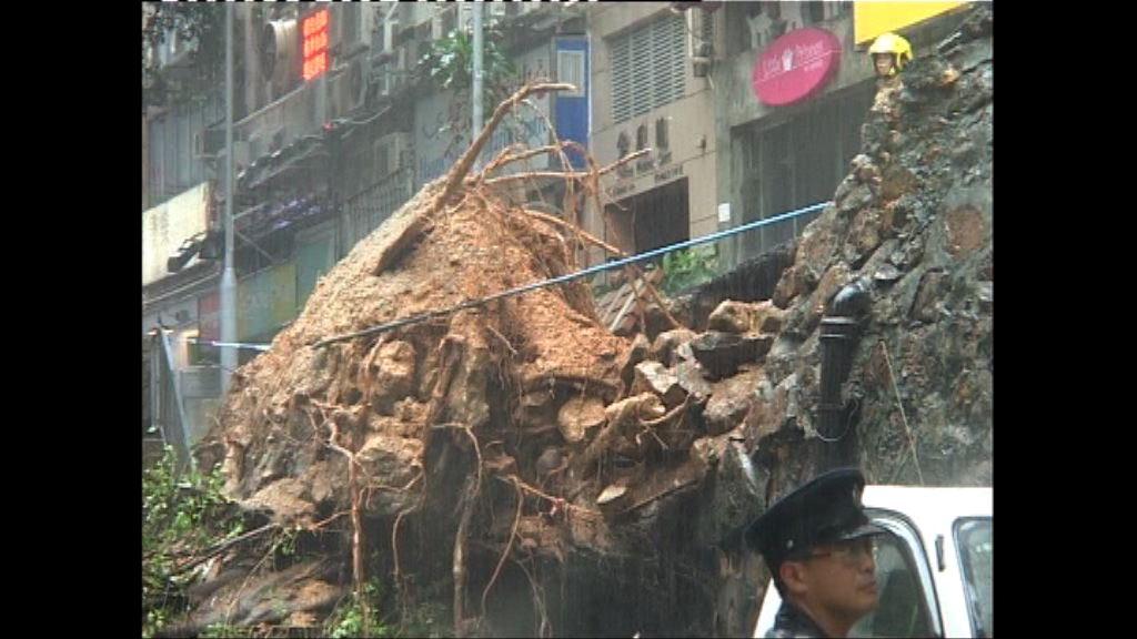 申訴專員調查政府樹木管理制度