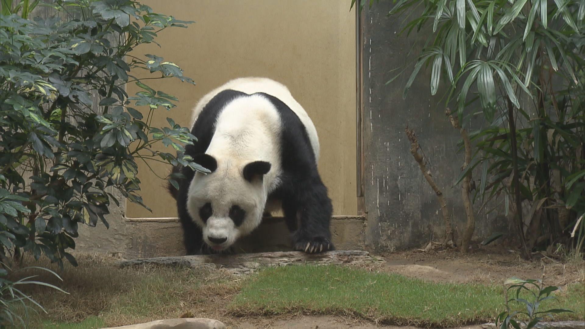 海洋公園或倒閉 護理員:動物是香港一分子不應搬遷