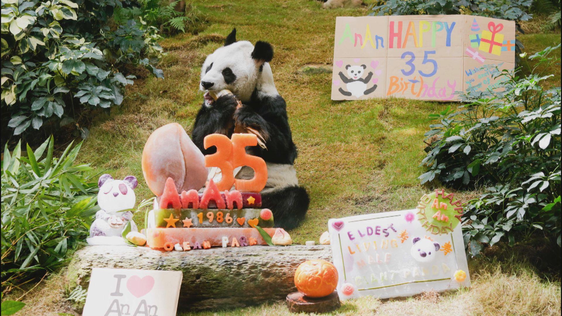 海洋公園安安將35歲 成全球最長壽雄性大熊貓