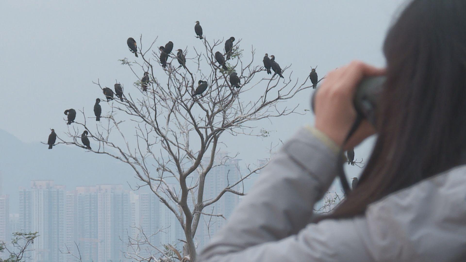 【經緯線本周提要】米埔水鳥十年減少三成
