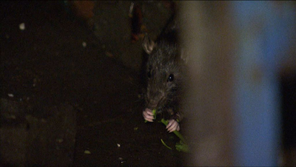 【經緯線本周提要】網民報料旺角一街市晚上鼠患嚴重