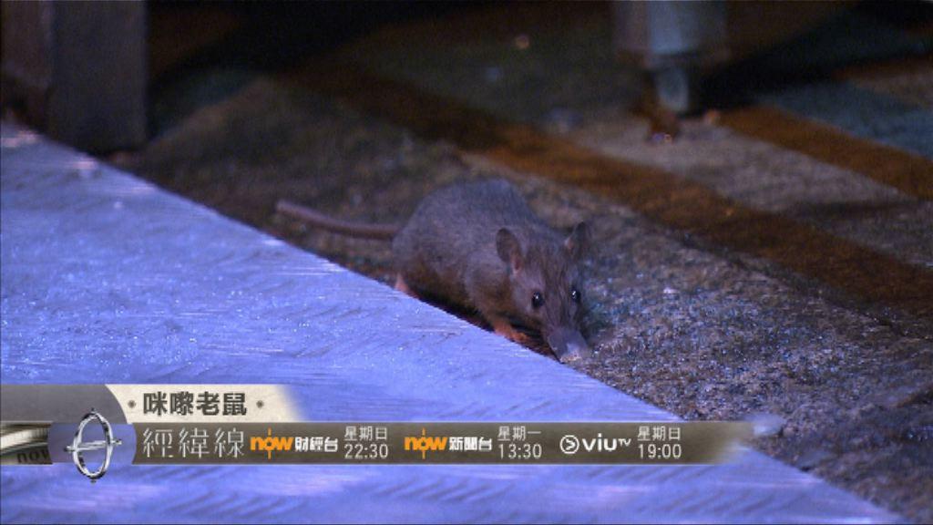 【經緯線本周提要】咪嚟老鼠