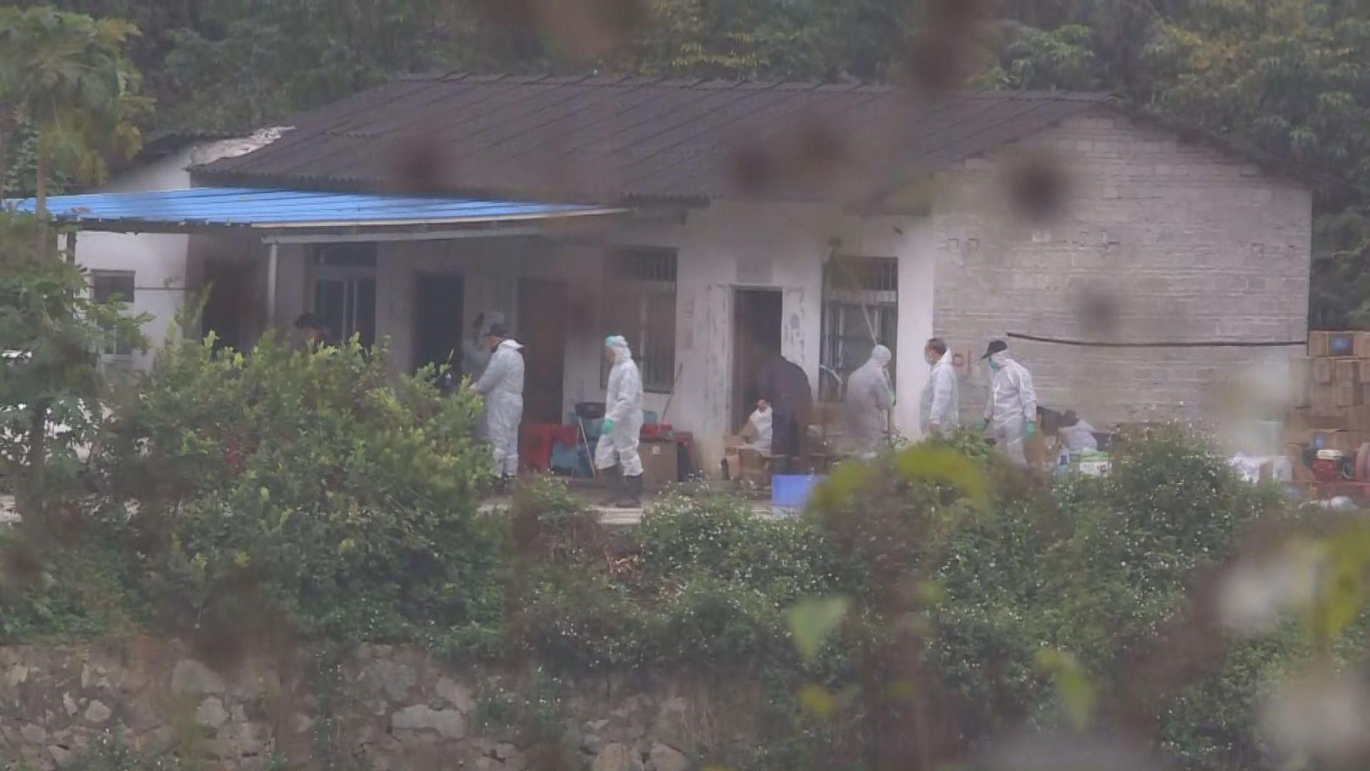 防疫人員到廣州黃埔區豬瘟疫點消毒