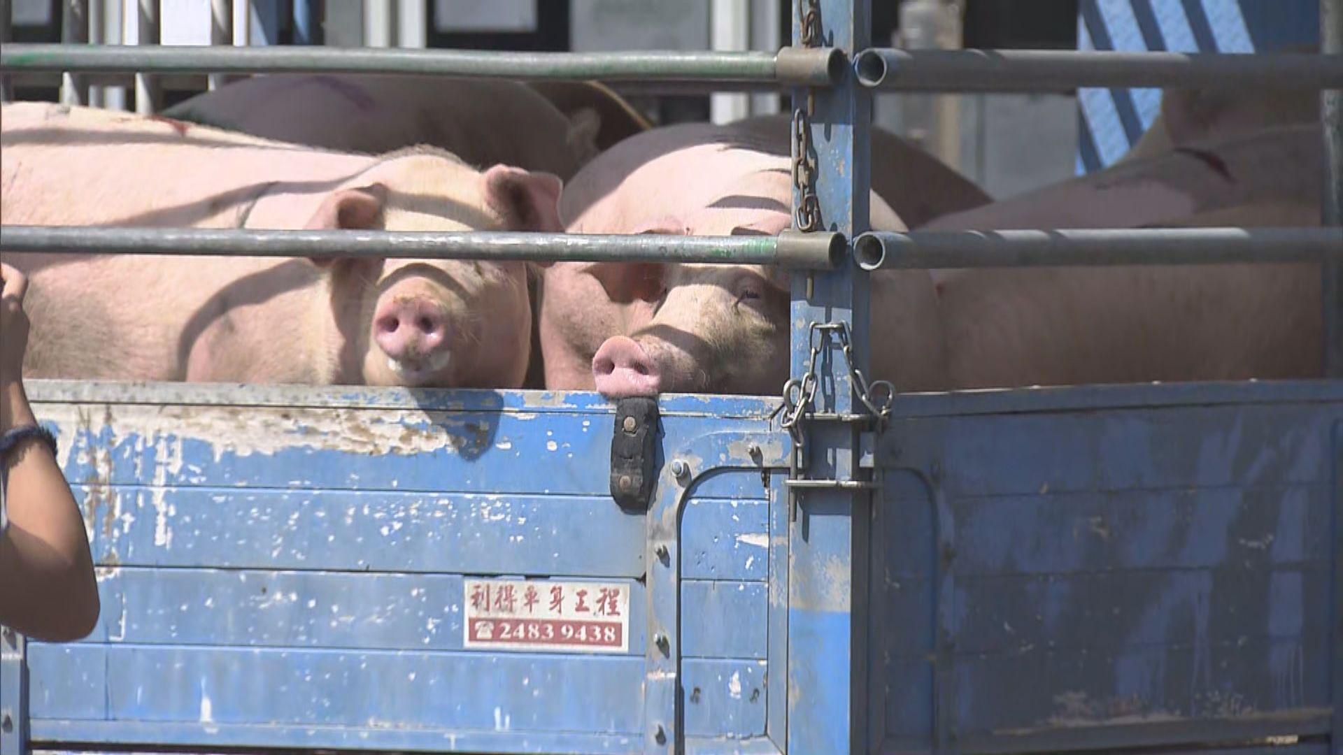 豬肉業界將定期會見食環署跟進屠房日日清