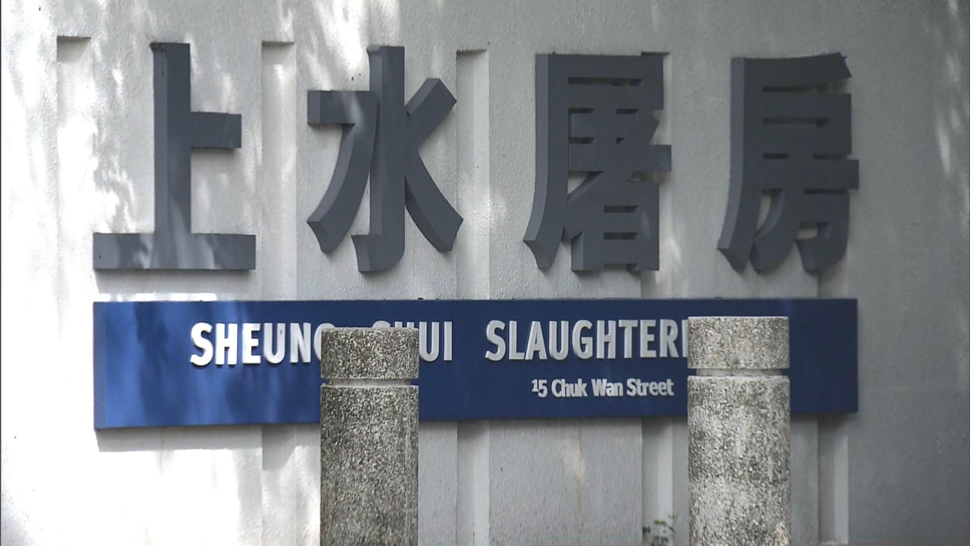 上水屠房恢復運作 料明有1400隻活豬應市
