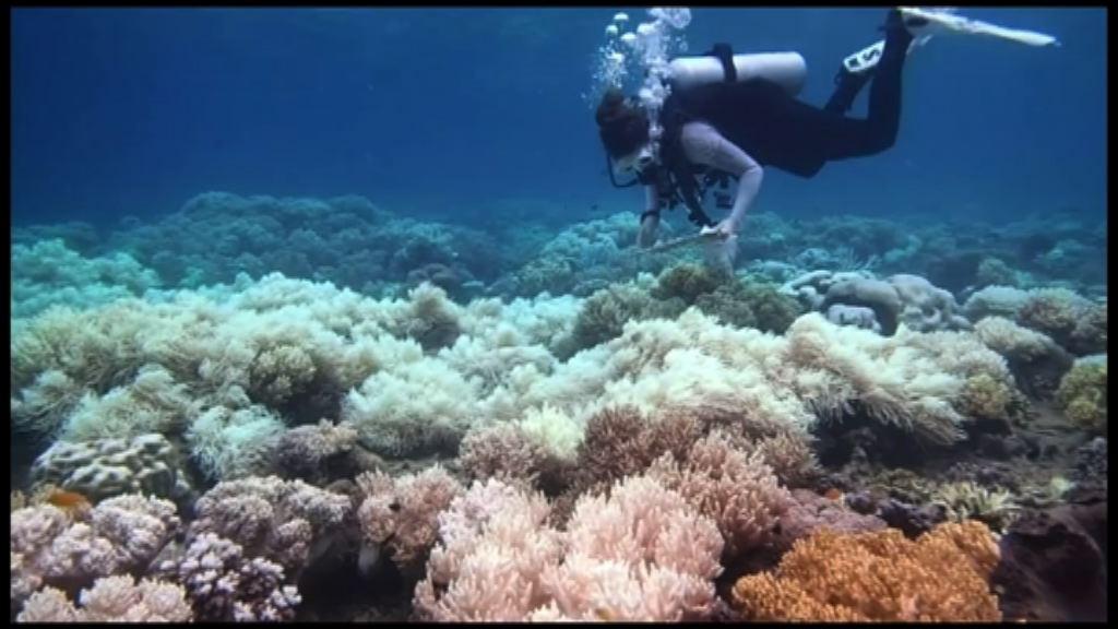 澳洲科學家研發薄膜保護珊瑚免白化