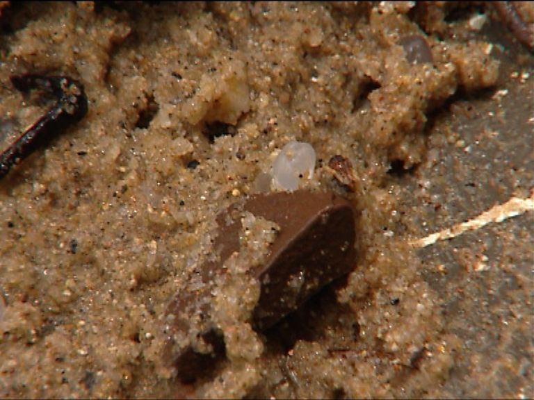 研究發現河流及海洋微塑膠污染嚴重
