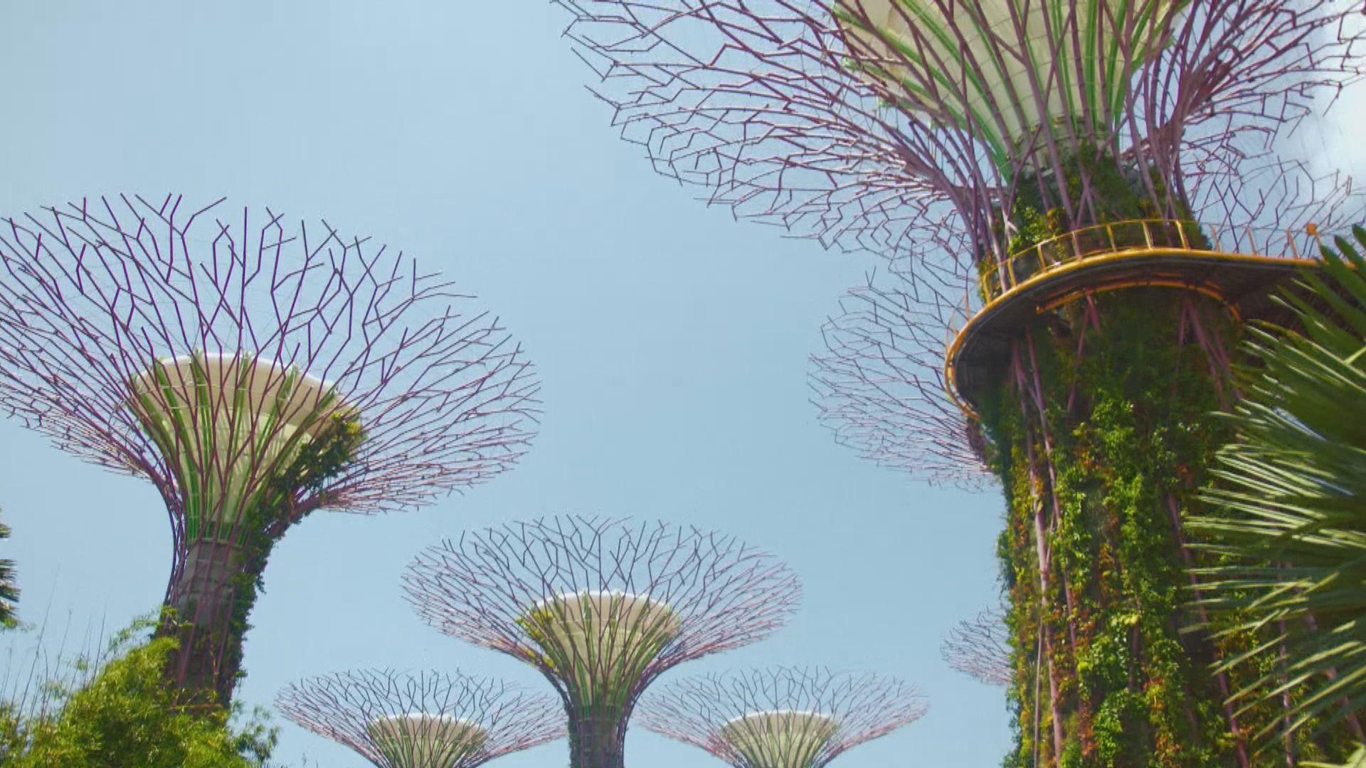 據報新加坡因應本港疫情正研旅遊氣泡會否如期實施