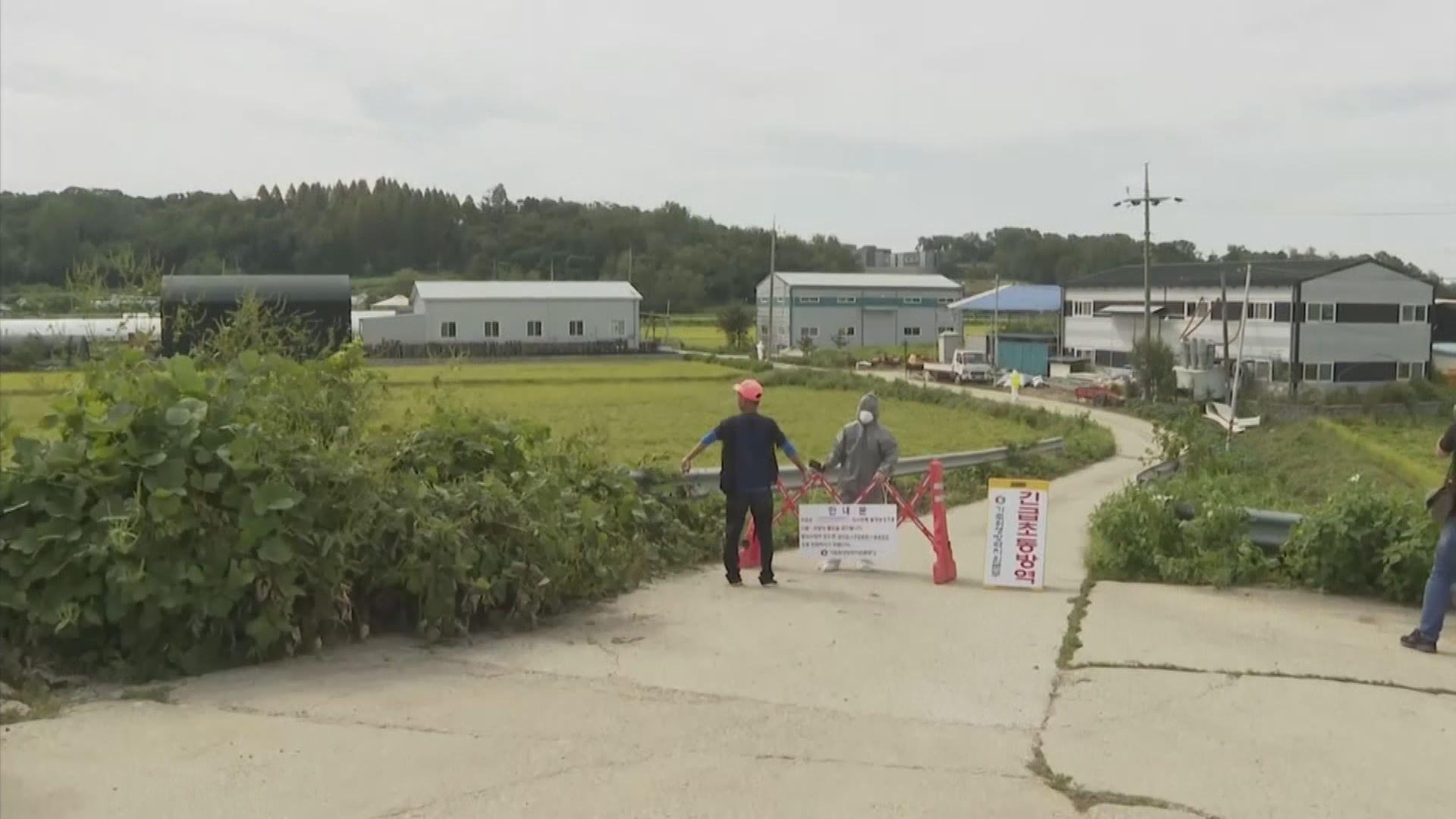 南韓首爆非洲豬瘟全國實施家畜禁運令