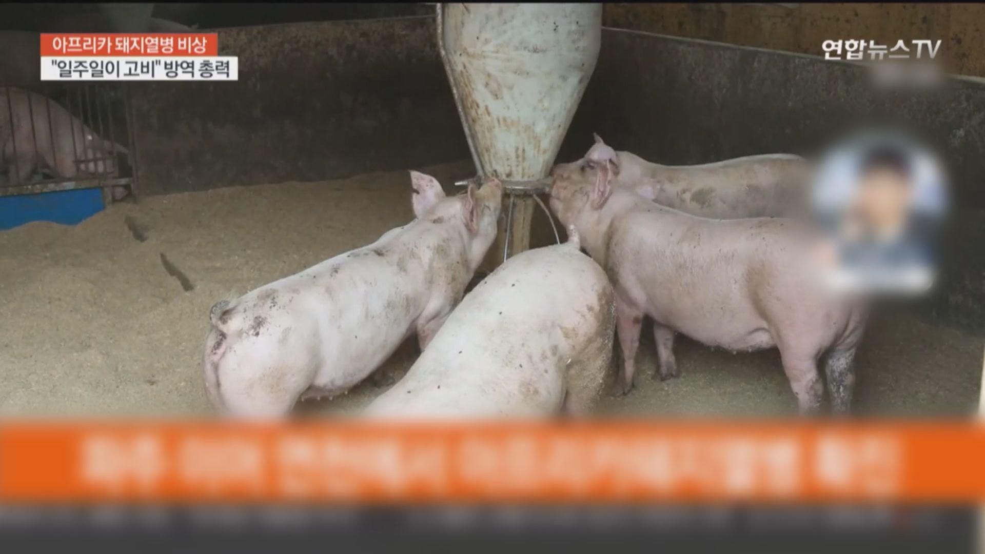南韓再出現確診非洲豬瘟個案