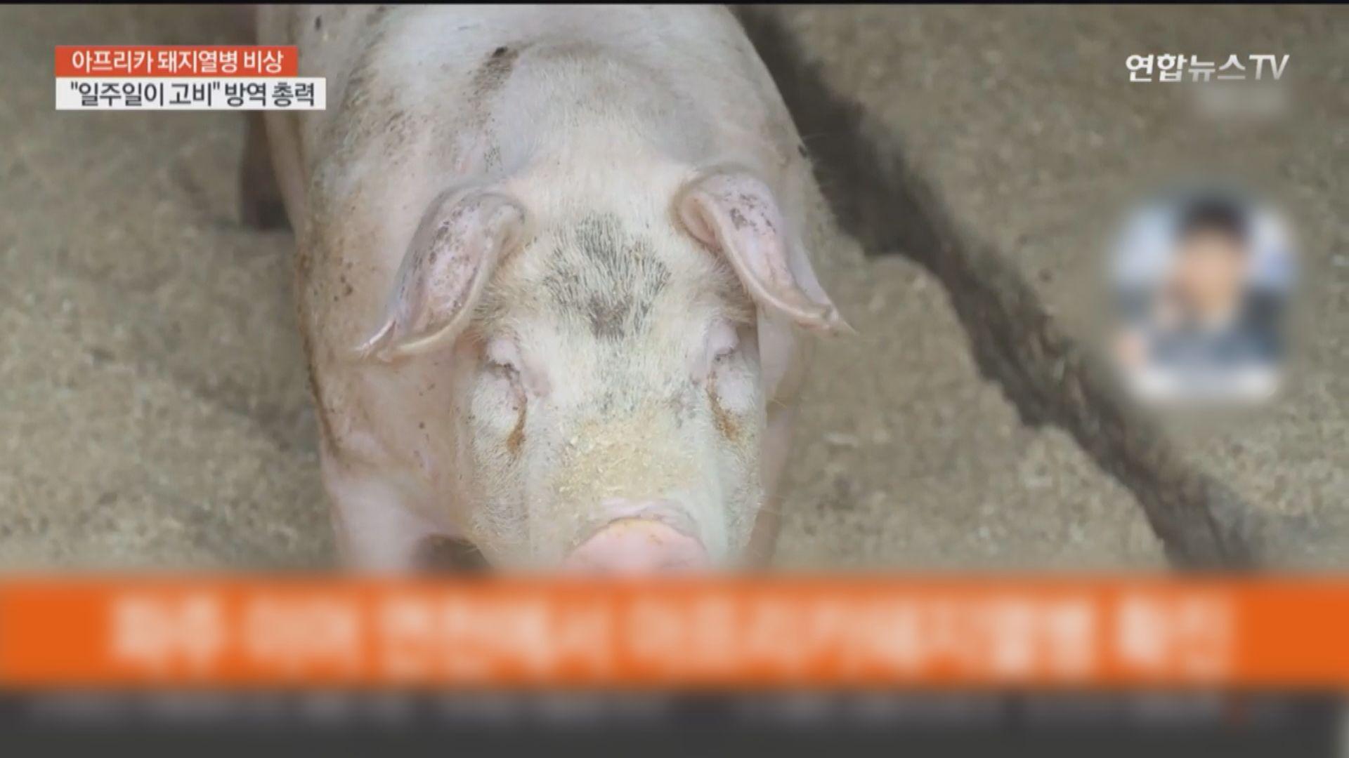 南韓正調查北韓野豬傳入非洲豬瘟可能性