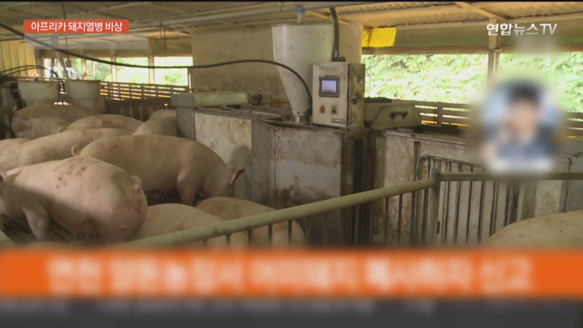 南韓再出現疑似非洲豬瘟病例